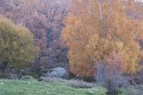 Zona de bosque en la Dehesa de Candelario, espectacular en otoño